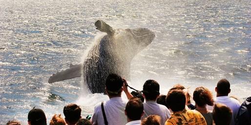 ¥109 -- 5折 新泽西港2小时出海观鲸追海豚 大西洋探索海洋生物 可选3小时体验