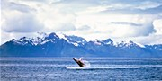 $2599 -- Weeklong Upscale Coastal Alaska Cruise incl. Air