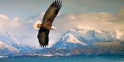 $279 -- Weeklong Alaska Cruise in Summer, 45% Off