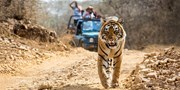 $1499 -- India: Luxe Escorted Trip w/Tiger Game Drive & Air