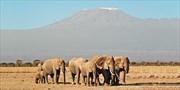 $3299 -- Tanzania 7-Night Serengeti Safari w/Air, Save $1230