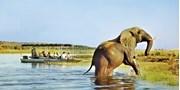 $4998 -- South Africa & Botswana Safari w/Air, $3520 Off