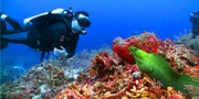 US$1371 -- Grand Cayman: Weeklong Dive Vacation, Save $650