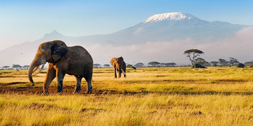 Kenya 5-Star Safari w/Air, From $1,899