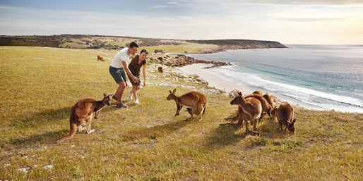 Explore Australia: Reef, Beach & Kangaroos, up to $1900 Off, From Washington D.C.