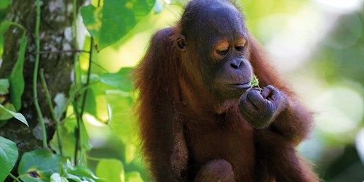 £899pp -- KL & 5-Star Shangri-La Borneo Holiday w/Orangutans