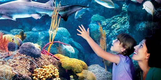 $99 -- Tampa Bay: 9-Day Pass to Top Attractions, Reg. $196