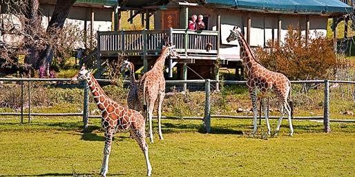 $159 -- Sonoma: Luxe Safari 'Glamping' Experience, Reg. $232