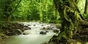 ¥246 -- 深度马来西亚任性自由行 吉隆坡雪兰莪猴子山+萤火虫亲子之旅