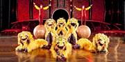 $55 -- Cirque du Soleil Holiday Offer in Kamloops