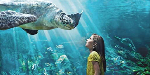 $70-$76 -- SeaWorld San Diego: 7 Days of Unlimited Visits