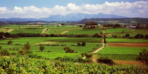 Vista de campo viñedos Penedés