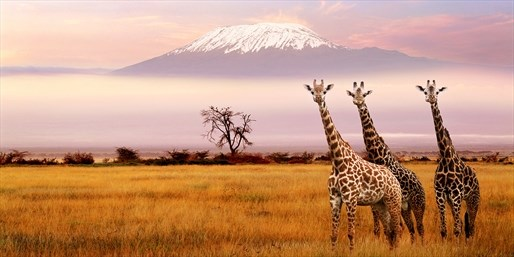 ab 242 € -- Safari, Palmenstrand und top Angebote für Kenia