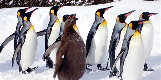 看企鹅北极熊憨态