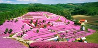 ¥1,055 --【札幌出发】北海道3处赏花名所+摩周湖+阿寒湖温泉二日游