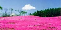 ¥1,315 --【札幌出发】北海道3处赏花名所+屈斜路温泉二日游 含丰富自助晚餐