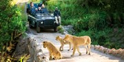 $4998 -- South Africa 5-Star Safari; Air from D.C.