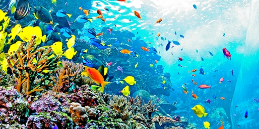 $49 -- Georgia Aquarium Day for 2: See 600 Species, Reg. $72