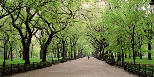 $14 -- NYC: Central Park TV & Movie Sites Tour, Reg. $25