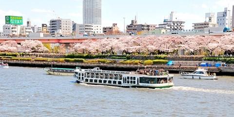 ¥6,980 -- 桜と食を満喫 隅田川花見クルーズ&食事付日帰り旅