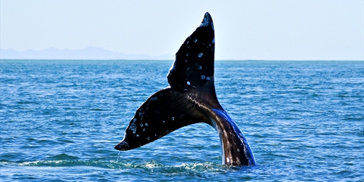 $35 -- Long Beach: Gray Whale-Watching Trip for 2, 50% Off