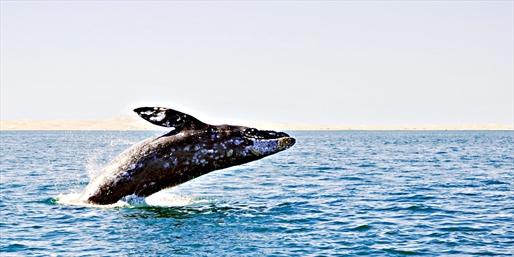 $23 & up -- Long Beach: Whale-Watching Tours thru Summer