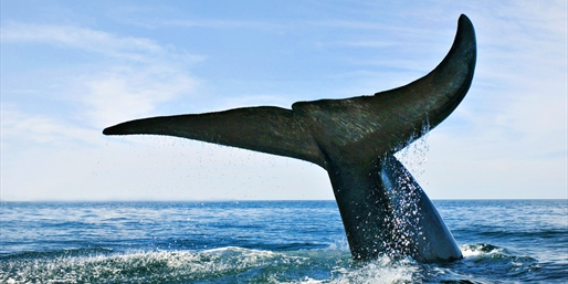 $29 -- Whale-Watching Cruise for 2 w/Drinks, Reg. $80