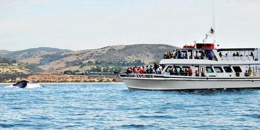 $11 -- Newport Beach Gray Whale Watching thru July, Reg. $36