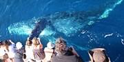 $11 -- Newport: Blue Whale Watching thru Nov., Reg. $36