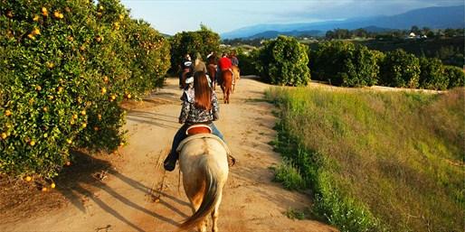 $49 & up -- 50% Off Vineyard Horseback Tour w/Tastings