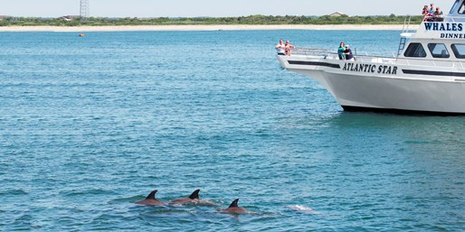 $22 -- Cape May Whale- & Dolphin-Watching Trip, Reg. $45