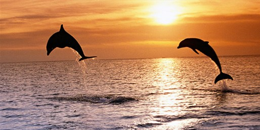 $28 -- Sunset Dolphin Dinner Cruise w/Drinks, 50% Off