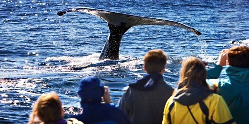 $19 -- San Diego Whale-Watching Trip in Peak Season