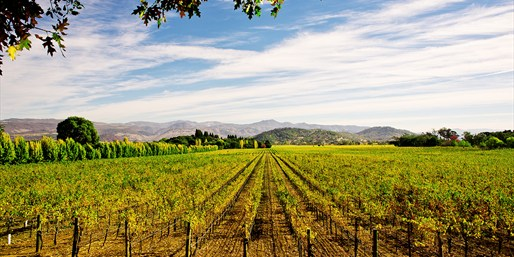 $99 -- Napa Valley Escape incl. Breakfast, Reg. $184