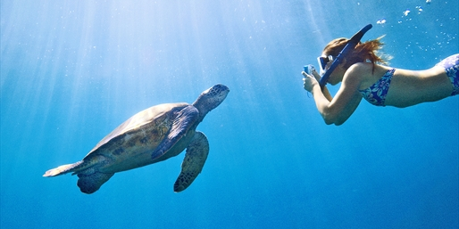 $24 -- Sea Turtle Snorkel Tour off Waikiki, 50% Off