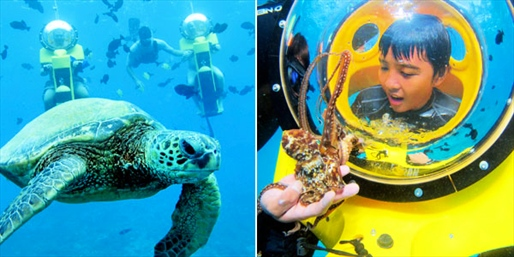 $95 -- Underwater Scooter & Turtle Encounter, Reg. $198