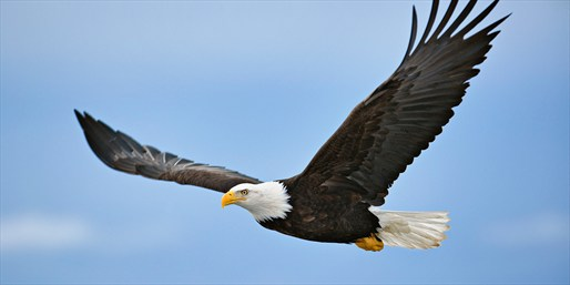 £18 -- Hands-on Birds of Prey Experience w/Eagles, Reg £78