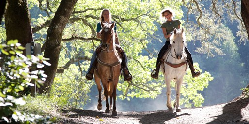 $29 -- Hudson Valley Horseback Trail Ride, 55% Off