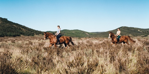 $59 -- Horseback Trail Ride in Santa Monica Mountains