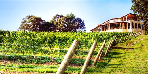 $29 -- Montaluce Winery: Guided Hike, Tastings & Apps