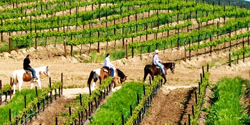 $69 -- Vineyard Horseback Ride w/Wine Tastings, Reg. $150