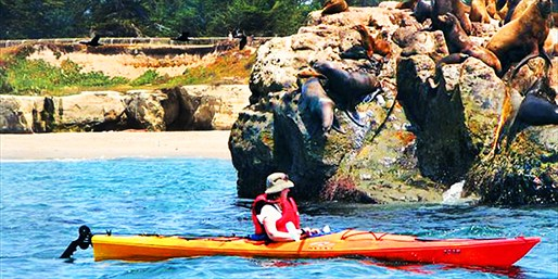 $32 -- Guided Wildlife Kayak Tour in Santa Cruz, Reg. $58