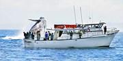 $25 -- Monterey Bay: Whale-Watching Cruise, Reg. $40