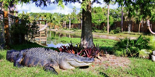 $25 -- Wild Florida: Pet Live Gators w/Lunch for 2, 55% Off