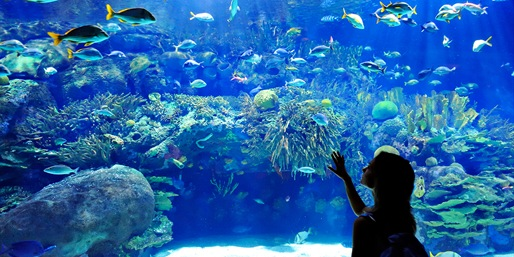 $39 -- World Aquarium: Hands-On Tour for 2, Reg. $130
