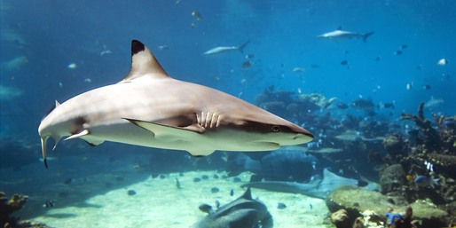 75% Off: Shark & Stingray Encounter Tour for 4