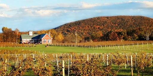 $34 -- Philip Carter Winery Tour & Lunch for 2, Reg. $85