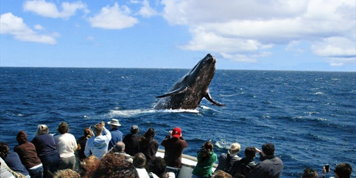 $25 -- Channel Islands: Peak Season Whale-Watching, Half Off