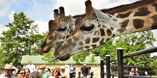 $15 -- Safari Niagara Day Pass through Summer, Reg. $28