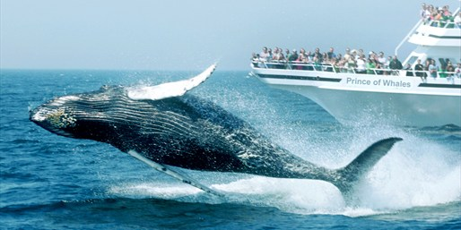 $29 -- Peak-Season Whale Watching into Summer, Reg. $50